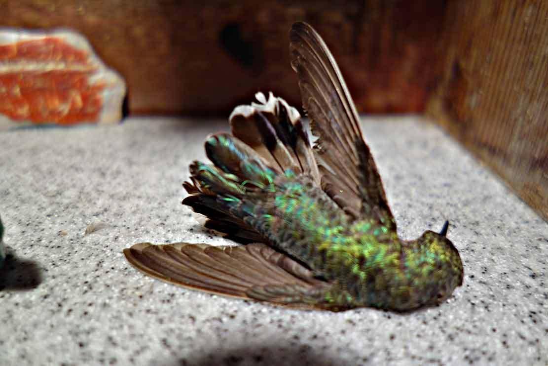 Hummingbirds ... 9740adeafc2b