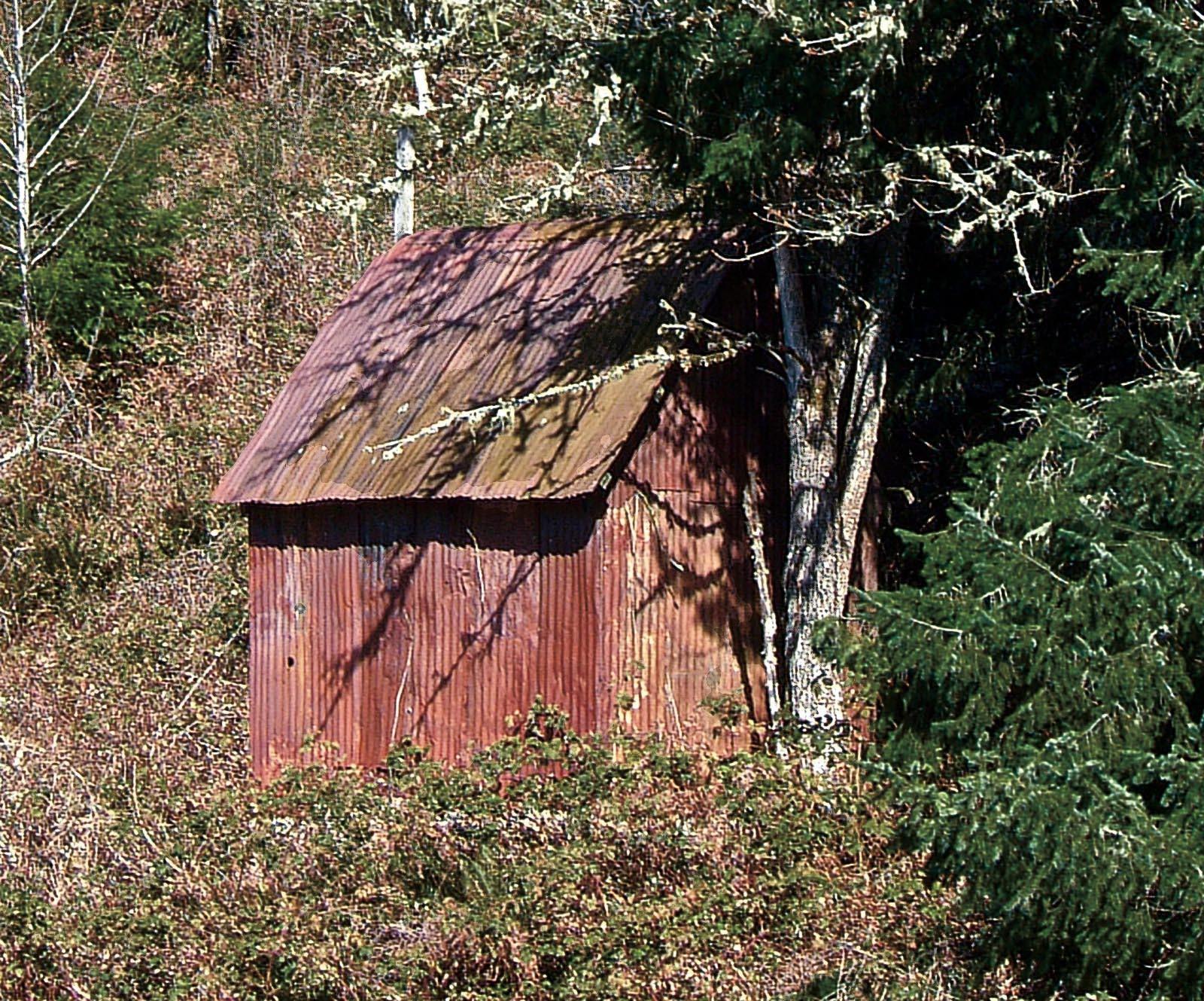 Tin Shack In Woods Lloyd S Blog