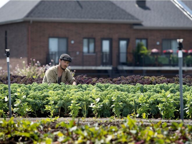 Canadian Supermarket Growing Vegetables on Roof